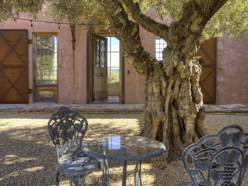 5800 petrified forest patio front door and olive tree