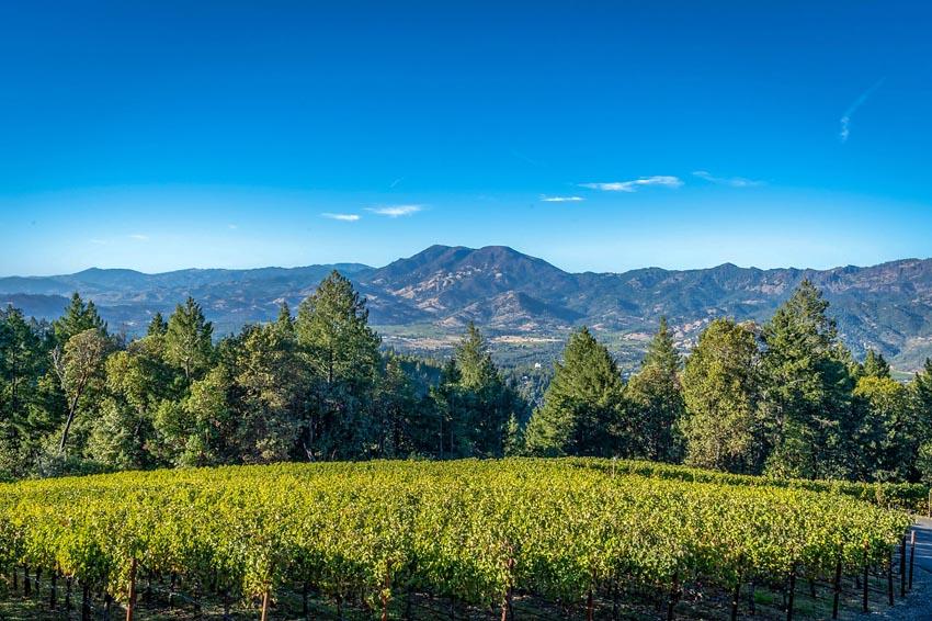 View of the vineyard 2110 Diamond Mountain Road
