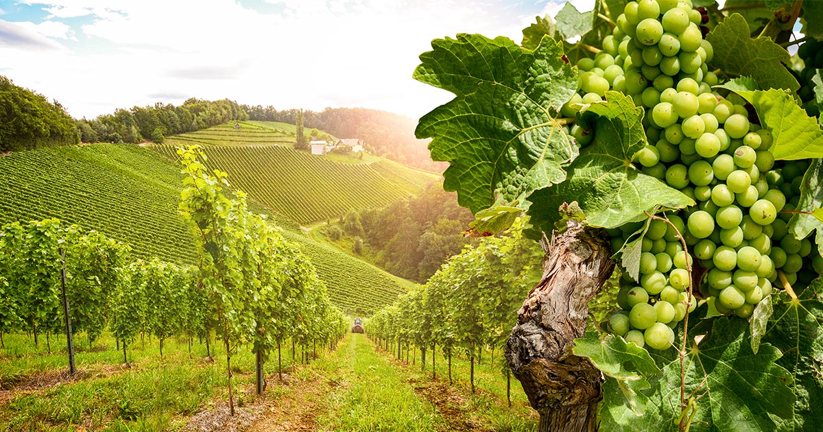 California Grape Crush Report 2020